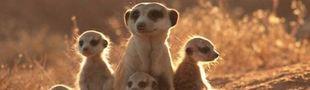 Cover Filmographie de la BBC Natural History Unit : Feature films