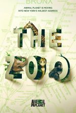 Affiche The Zoo (2017)