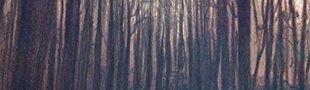 Couverture Cœur de bois