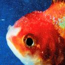 Pochette Big Fish Theory