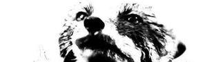 Cover Chaos Reigns - Le coin du cinéphile