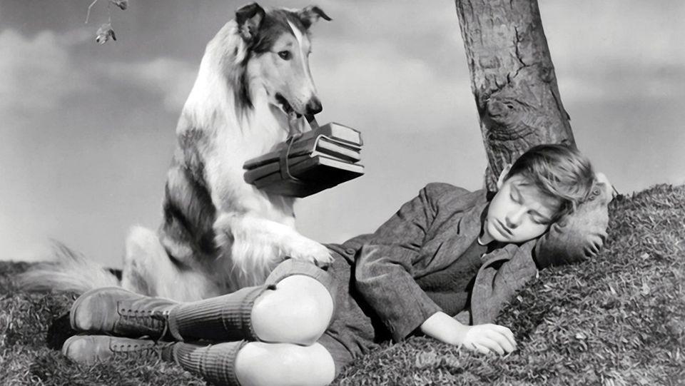 Fidele_Lassie