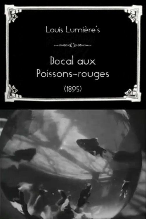 Bocal aux poissons rouges court m trage 1897 for Bocal poisson acheter