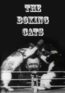 Affiche Les chats boxeurs