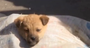 Affiche La Condition Canine