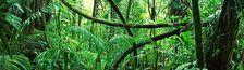 Cover Films de jungle