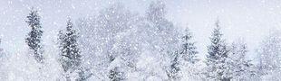 Cover Dans ce jeu, il neige !