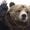 Avatar Bear Louis