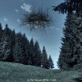 Pochette In The Stillness Of The Codrii
