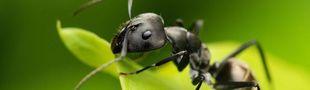 Cover Les insectes en musique