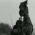 Illustration Le cheval de Turin : Béla Taar ou le refus... envers et contre tous