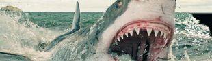 Cover Sharkathon