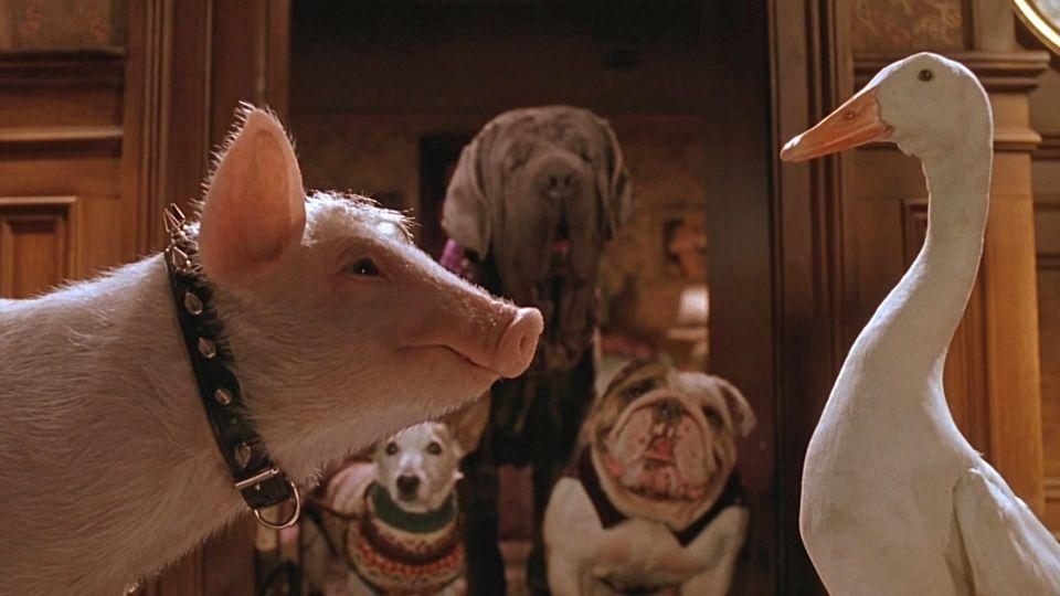 Affiches posters et images de babe le cochon dans la ville 1998 - Papa cochon a la piscine ...