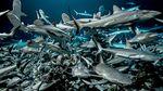 Affiche 700 requins dans la nuit