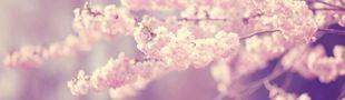 Cover Sakura no hana