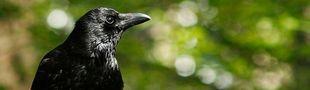 Cover Les meilleurs livres d'Edgar Allan Poe
