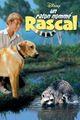 Affiche Un Raton Nommé Rascal