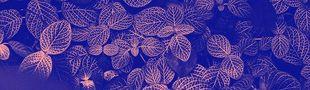 Cover Nature | Biomimétisme | Futur(s) | Design