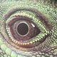 Avatar Lizard_Zoe