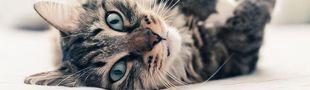 Cover Viens, mon beau chat, sur mon coeur amoureux...