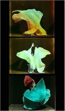 Affiche Danse serpentine