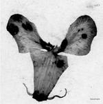 Pochette Dyscamupia (EP)