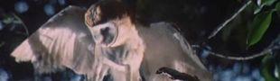 Cover Les meilleurs films de Nicholas Ray
