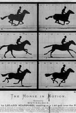 Affiche Séquence en mouvement du galop de Annie G.