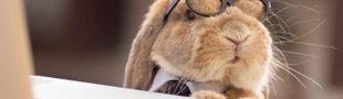 Cover Doudou le lapinou veut une liste sur les nounours