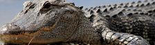 Cover Les meilleurs films de crocodiles/alligators