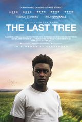 Affiche The Last Tree
