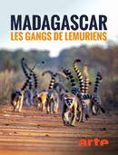 Affiche Gangs de lémuriens à Madagascar
