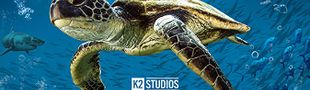 Affiche Turtle Odyssey