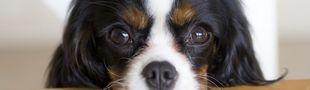 Cover films avec chiens