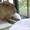 Avatar JoggingCapybara