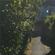 Avatar oreiller d'herbes