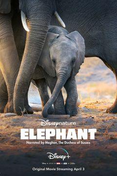 Affiche Éléphants