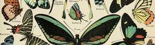 Cover Chronologie de mes essais lus