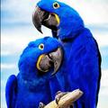 Avatar Azul
