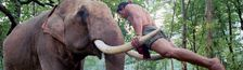 Cover Un éléphant, ça trompe énormément...