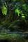 Cover Ecopsychologie & Ecothérapie