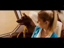 Video de Red Dog