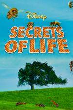 Affiche Les Secrets de la Vie