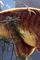 Cover Univers - Top 15 de Dinosaures et Pseudo-Préhistoire
