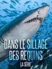 Affiche Dans le sillage des requins