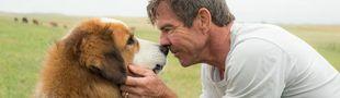 Cover Les meilleurs films où le personnage principal est un chien