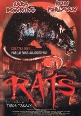 Affiche Rats