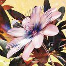 Pochette Passionfruit (Drake cover) (Single)
