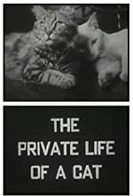 Affiche The Private Life of a Cat