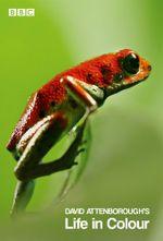 Affiche La Vie en couleurs avec David Attenborough